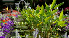 Flowers and lily pads Stock Footage