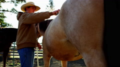 Male Cowboy grooming horse on Dude Ranch Wild west BC - stock footage