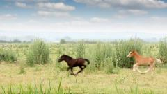 Foals running on field Stock Footage