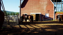Cowgirl and Cowboys relaxing on horse Ranch Canada BC - stock footage