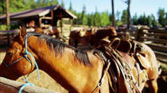 Horse Corralled on Dude Ranch American Rockies USA - stock footage