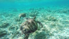 Sea turtle swimming around. Stock Footage