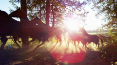 Galloping horses in Roundup on Wilderness Cowboy Dude Ranch America - stock footage