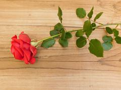 roses on a wooden base - stock photo