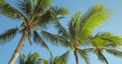 Palm trees and blue sky in Hawaii Stock Footage
