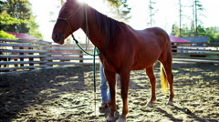 Horse Corralled on Dude Ranch Canadian Rockies BC - stock footage