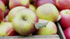 Black Twig apples at market Stock Footage