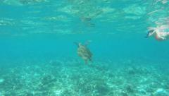 Snorkeling with a sea turtle. - stock footage