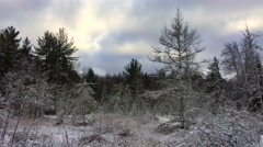 4K Snowy winter meadow in forest with dramatic sky Stock Footage