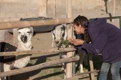 Stock Photo of Young woman feeding a goat and lama in safari park