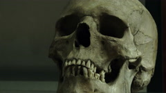 Skull: archaeological find in a museum Stock Footage