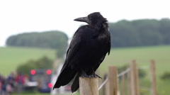 Crow on fence Stock Footage