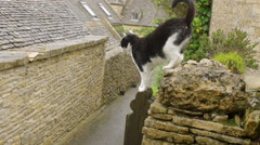Stock Video Footage of cat jumping from a wall: slow motion footage