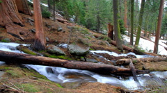 Stock Video Footage of Sequoia National Park 4k 014