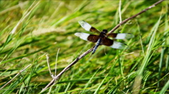 View of Dragonfly insect Badlands Dakota National Park Stock Footage