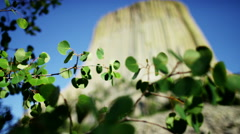 View of green foliage near Devils Tower Wyoming USA - stock footage
