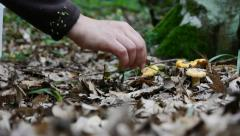 Picking wild mushrooms 15a Stock Footage