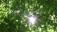 Looking towards the sun that shines through the  leaves of deciduous forest 60 - stock footage