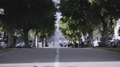 Boulevard Trees Graded Stock Footage