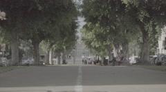 Boulevard trees Ungraded Stock Footage
