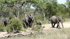 Big herd of elephants walking towards a small waterpool Stock Footage