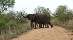 Two big elephant with calf crossing the road Stock Footage