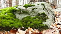Tracking Shot Of Forest  Moss on rock Stock Footage