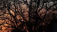 Sunset in the French campaign - stock footage