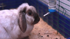 Beautiful Rabbit in cage Stock Footage