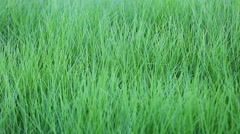 Green grass in shallow DOF Stock Footage