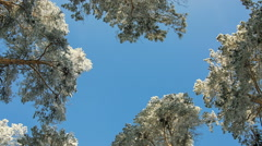 Treetops blue sky winter - stock footage