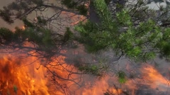 Closeup of burning pine in forest fire Stock Footage