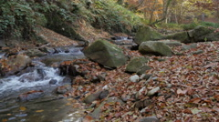 River flowing through the forest.fallen yellow leaves,untouched nature,pan left. Stock Footage