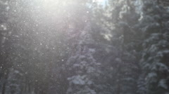 Snowflakes blowing against a background of tall pines Stock Footage