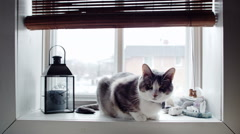 Cinemagraph (Photo-Motion) of Funny Cat at the Window - stock footage