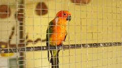 Dolly shot of parrot in the bird cage Stock Footage