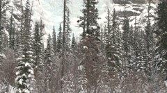 Snowy forest and icy cliffside in an Athabasca mountain range. Stock Footage