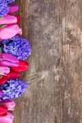 Blue hyacinth and  tulips Stock Photos