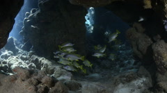 School of colorful tropical fish inside an underwater cave - Red Sea Stock Footage