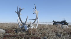 Stock Video Footage of Antlers on the arctic plains w-snowmobile