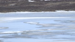 Water flowing through Arctic tundra in spring. Stock Footage