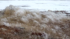 Grassy area within the Arctic tundra. Stock Footage