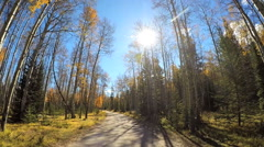 POV driving through evergreen forest habitat in Canada - stock footage