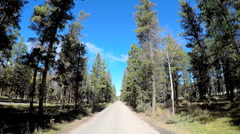 POV driving through tall evergreen forest in remote location - stock footage