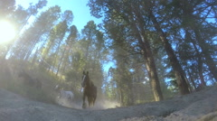 Horses running in forest Roundup on Dude Ranch USA Stock Footage
