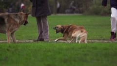 Dog fight in park. Part 2, slow motion. Stock Footage
