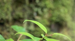 Plant life in a British Columbian rain forest. Stock Footage