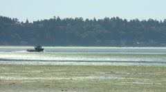 Boat travelling through a British Columbian marsh. Stock Footage