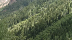 A wooded slope within the Bugaboo Mountain range. Stock Footage