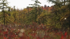 Red flowered bog flora. Rack Tilt Stock Footage